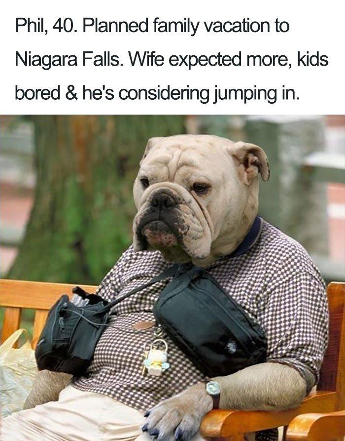 funny-dog-bios-82-59ad2f64bea2c__700