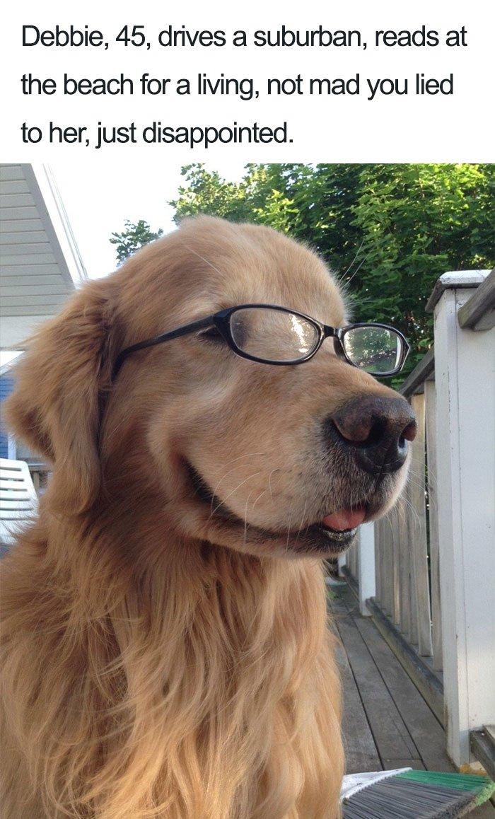 funny-dog-bios-85-59ad3183231cd__700