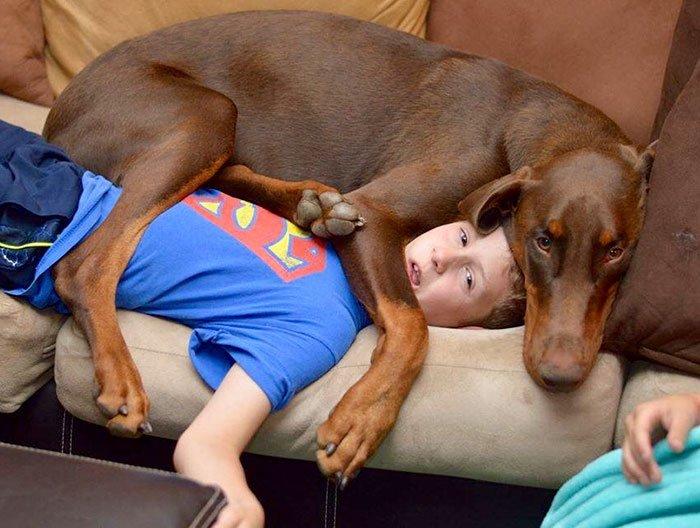 giant-lap-dogs-102-599c1e2923f0a__700
