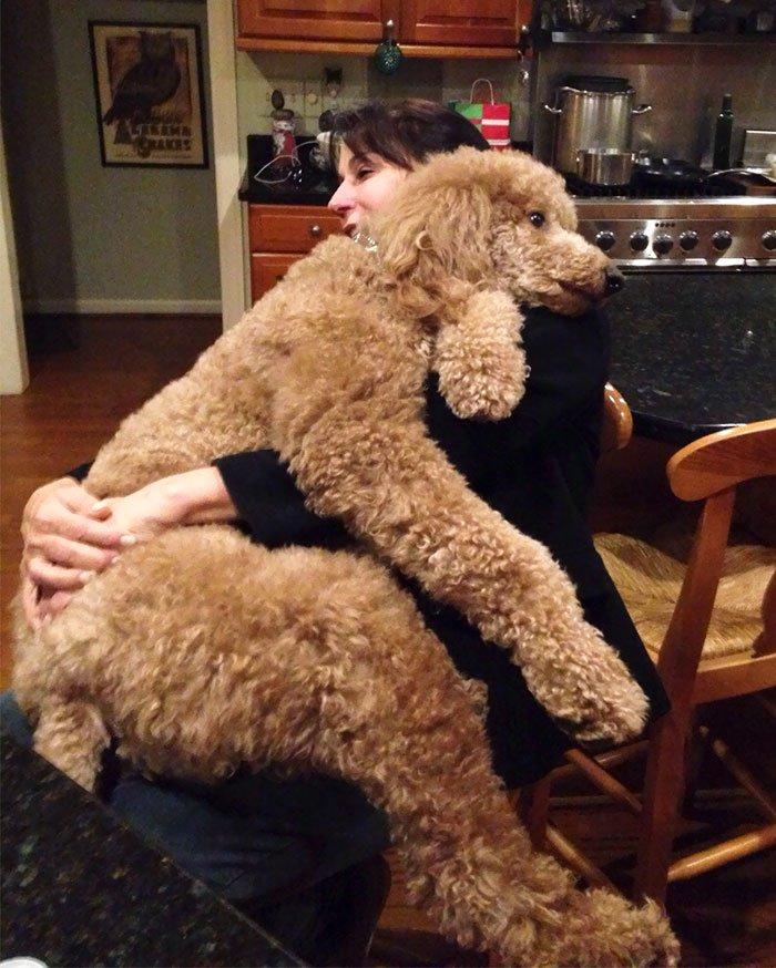 giant-lap-dogs-110-599c3131842d3__700