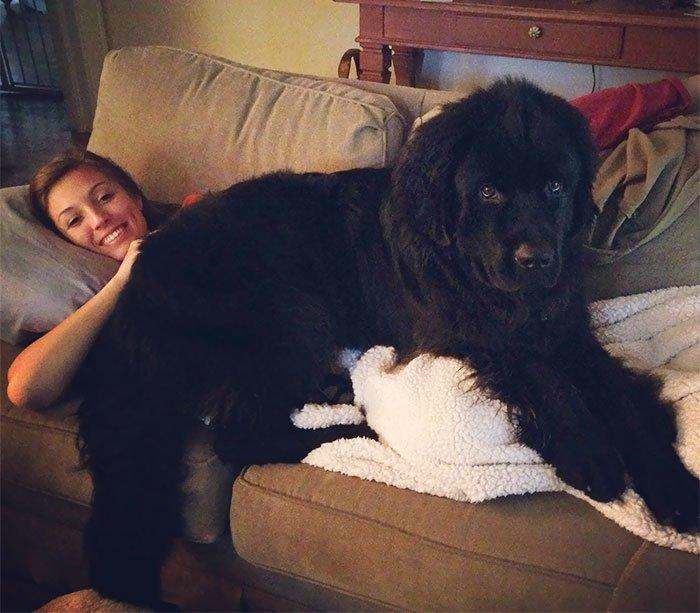giant-lap-dogs-111-599c3189dedd9__700