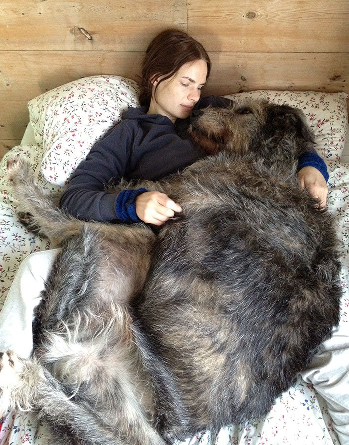 giant-lap-dogs-182-59a02957ebee8__700