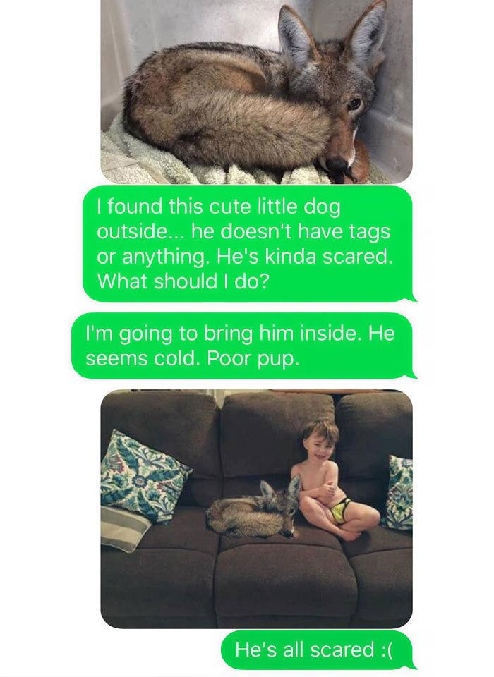 husband-freaks-out-after-his-wife-texts-him-she-brought-a-dog-home-while-the-pic-shows-its-coyote-5842a5909048b__700