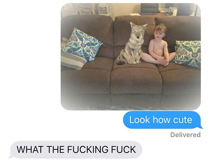 husband-freaks-out-after-his-wife-texts-him-she-brought-a-dog-home-while-the-pic-shows-its-coyote-5842a5db0520a__700