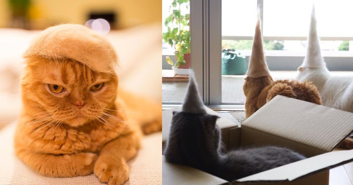 image of  bean  for  blog  2.png?resize=1200,630 - 迷上手作羊毛氈的主人為喵星人打造「超憨帽帽」!貓貓無奈戴上:「鏟屎官真是得寸進尺...」