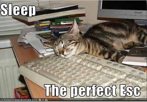 lazy-cat-5