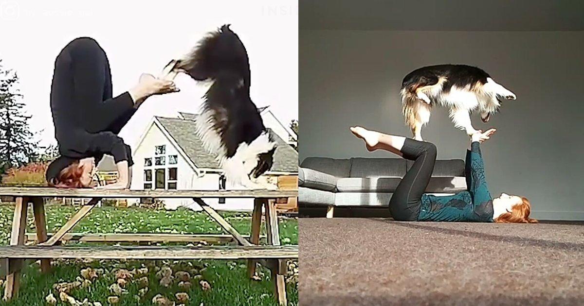 main 2 - 澳洲「會瑜珈的狗狗」驚豔全球!十八般武藝樣樣難不倒,竟然還會幫主人做「這件事」網友直呼:「超夢幻」!