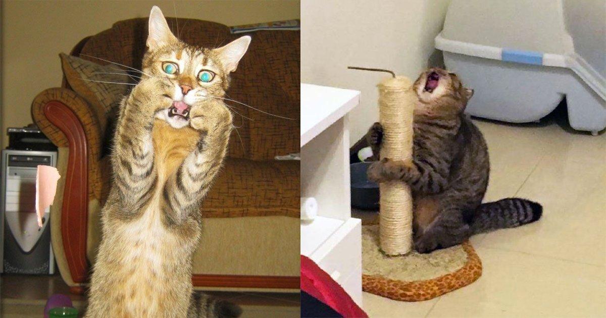 main 3.png?resize=1200,630 - 外媒蒐集20隻「超誇張演技貓咪」爆笑模樣讓網友直呼:「下一屆奧斯卡金像獎得主!」