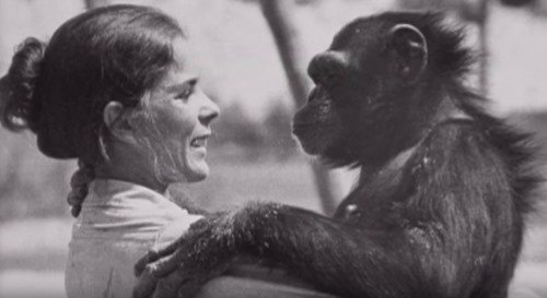 monkey.jpg?resize=300,169 - 18 Years Pass Since She Saved Chimps, She Ignored The Warnings And Moves Closer
