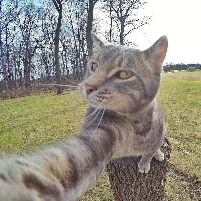 ordinary-day-cat-started-take-selfies_manny-cat-takes-selfies-dogs-gopro-11