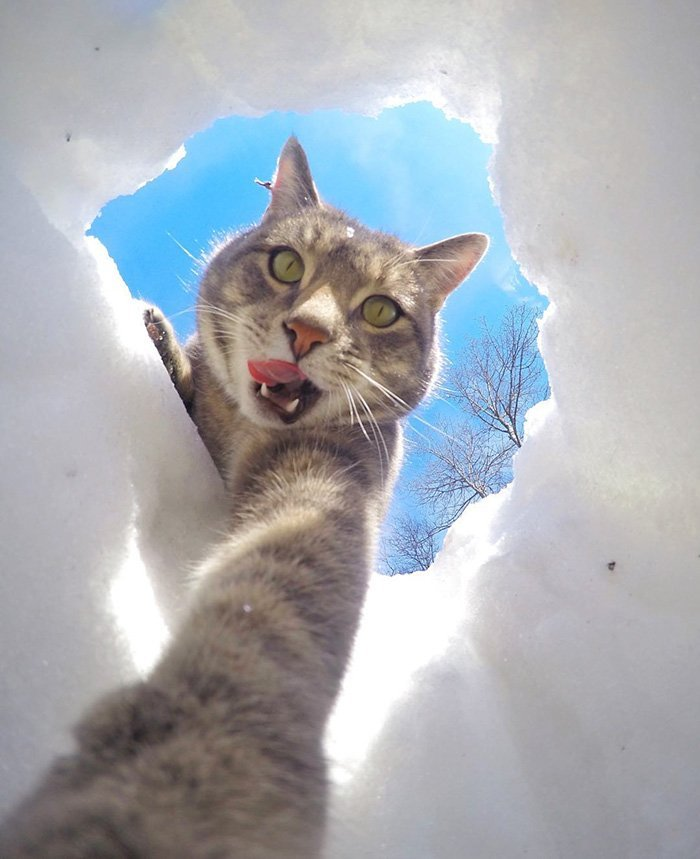 ordinary-day-cat-started-take-selfies_manny-cat-takes-selfies-dogs-gopro-16