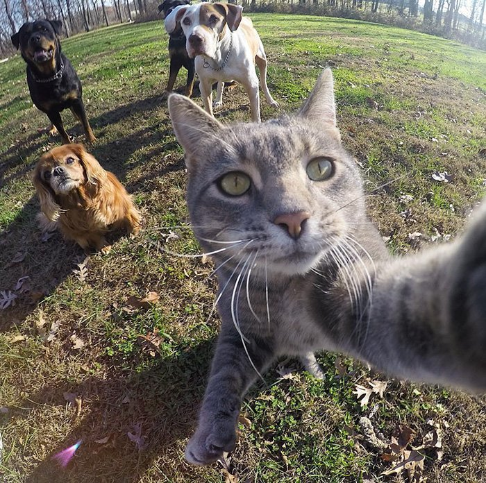 ordinary-day-cat-started-take-selfies_manny-cat-takes-selfies-dogs-gopro-9