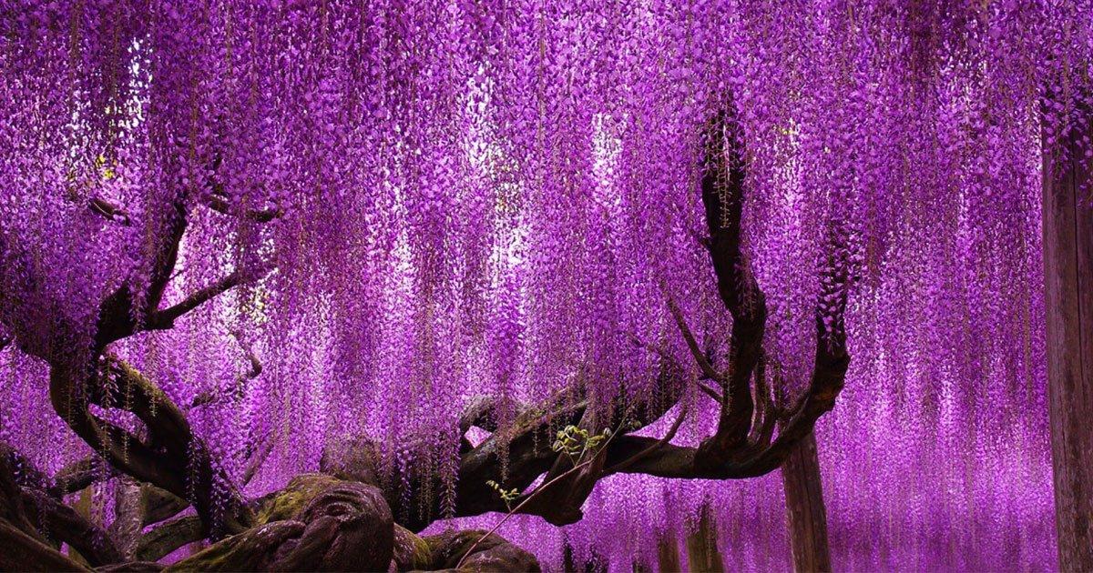 portada 4.jpg?resize=1200,630 - Diez árboles que nos enseñan que se pueden vencer los obstáculos sin importar lo grandes que sean.