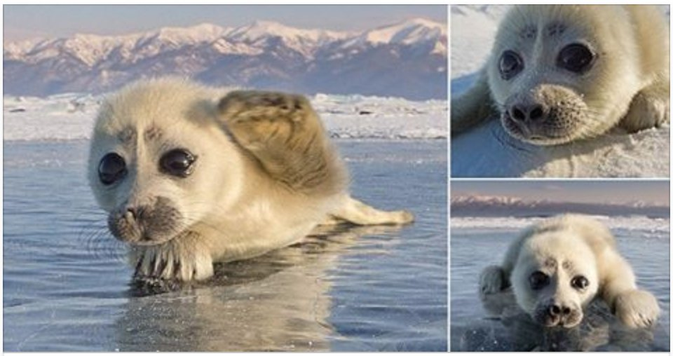 screen shot 2017 10 23 at 5 02 26 pm - Tiny Seal Pup Happily Poses For Icy Photoshots