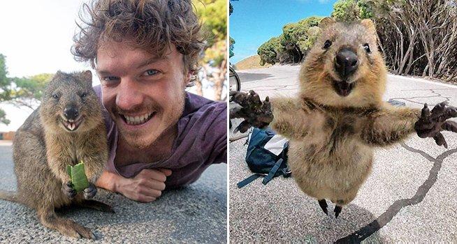 t52 1 - 男子騎單車旅行,遇到一隻「超級欠抱」的可愛短尾袋鼠!眾網友融化:「這不抱緊不行!」