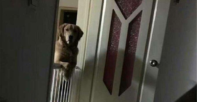 1 510.jpg?resize=412,232 - Casal descobre porque seu cachorro recém-adotado não dorme à noite e se emociona