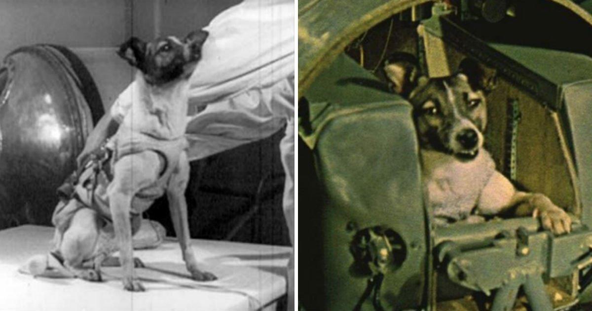 234q.jpg?resize=300,169 - 최초로 우주여행을 떠난 '강아지 라이카'에 대한 '충격적인' 진실