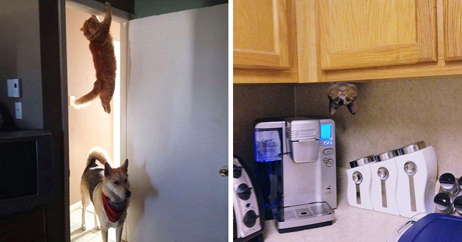 25 photos proving that cats are basically ninjas.jpg?resize=412,232 - 21 gatos que são feras no esconde-esconde