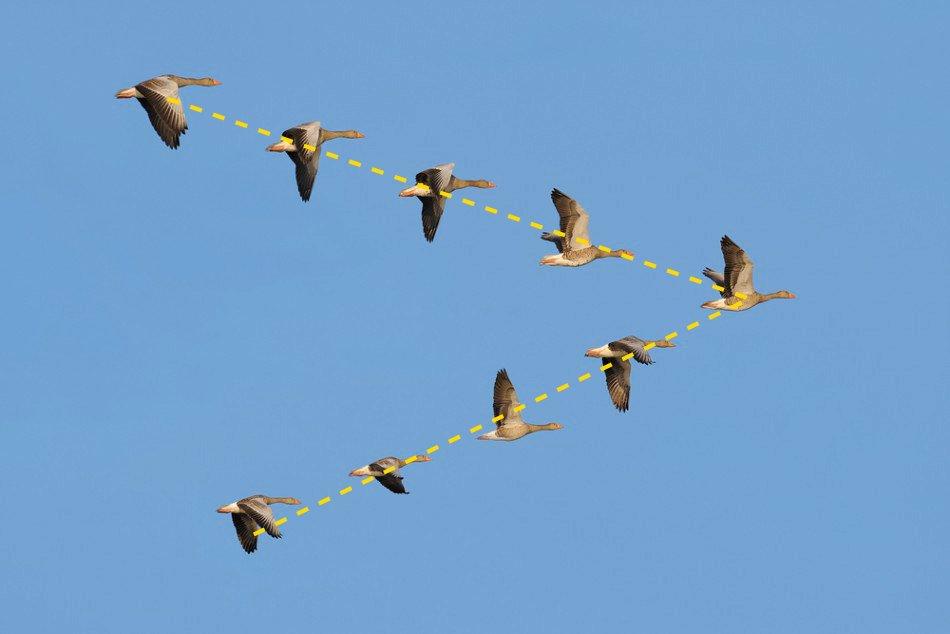 5864-flock-of-geese