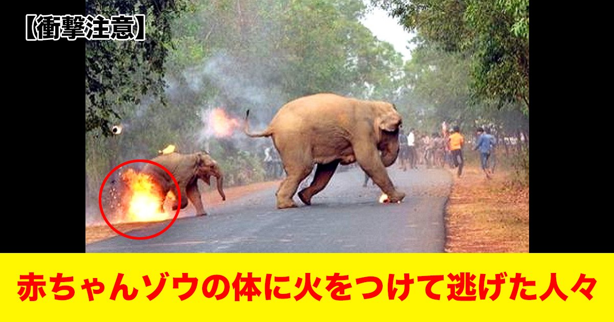 88 114.jpg?resize=1200,630 - 【衝撃注意】 赤ちゃんゾウの体に火をつけて逃げた人々