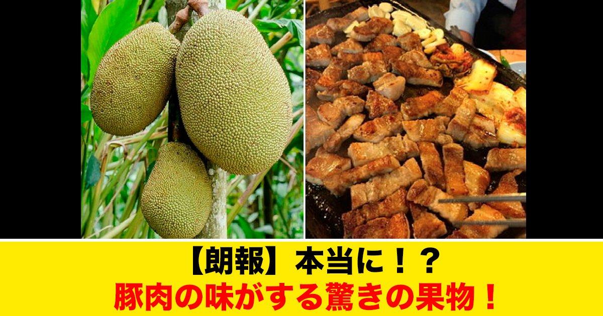 88 93.jpg?resize=1200,630 - 【朗報】本当に!?豚肉の味がする驚きの果物!