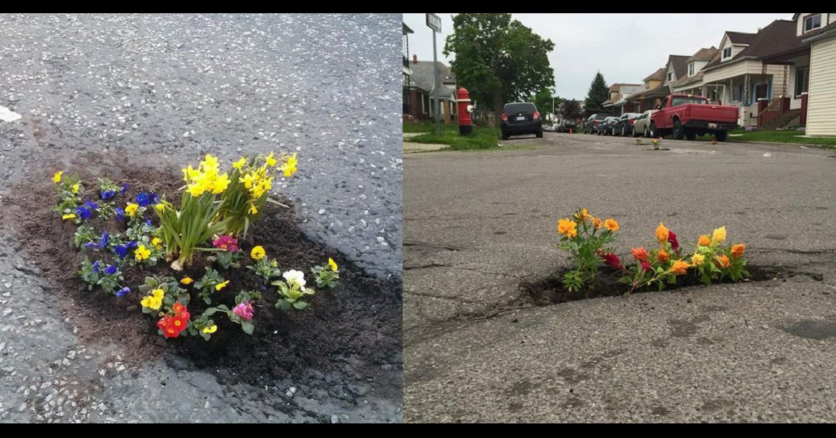 aaaa - People React by Planting Flowers in Potholes When the Government Fails to Take Action
