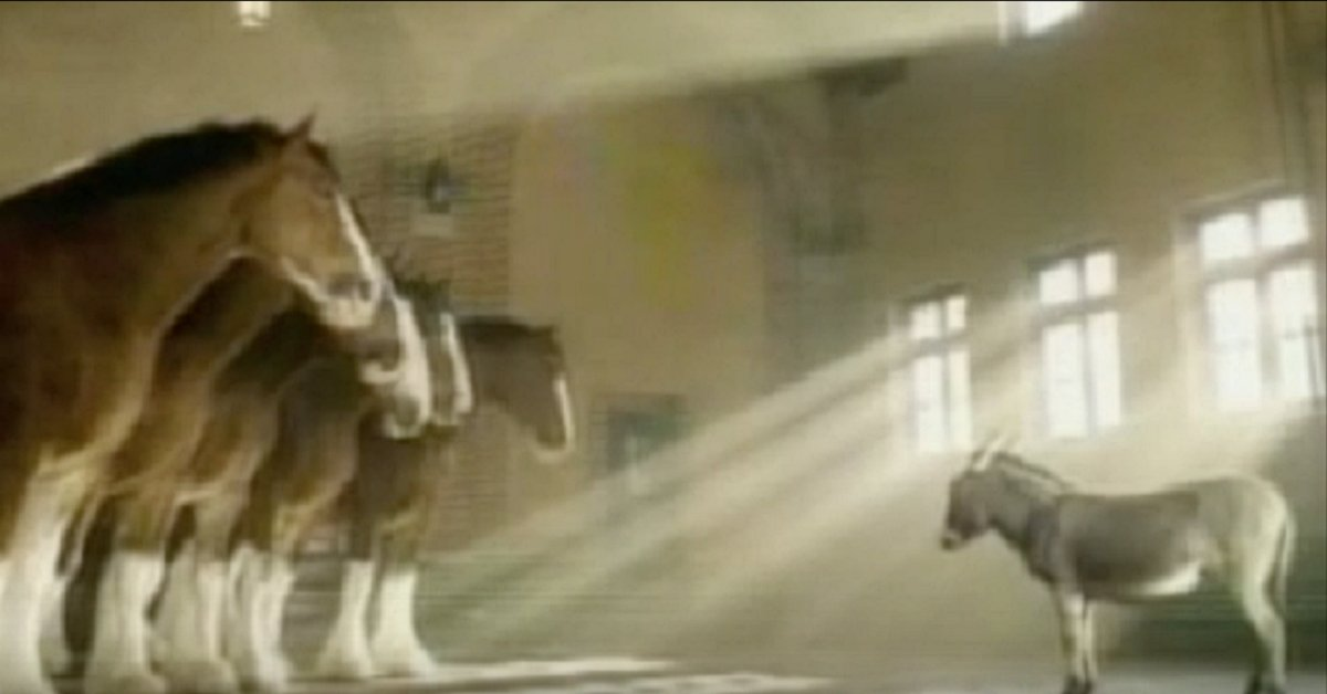 aaaaaaaaaaaaaa 2 - A Cute Little Donkey Confronts Huge Horses, And His Next Move Leaves Everyone In Tears