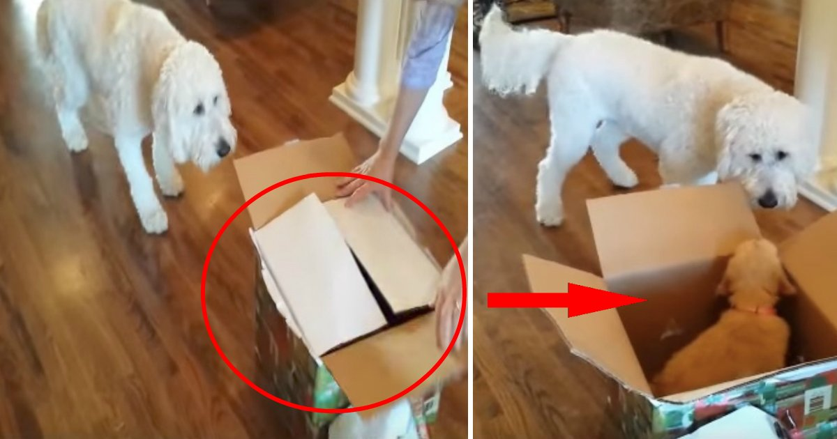 amigofin.jpg?resize=412,232 - Vídeo de cão recebe mais de 6 milhões de visualizações na Internet