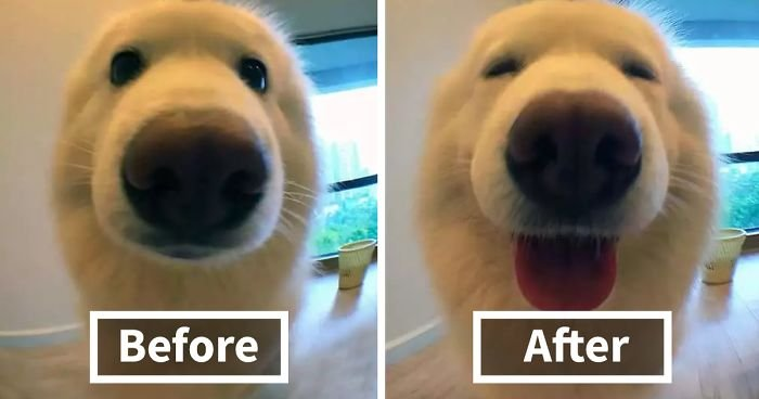 before after called good boy fb  700 png.jpg?resize=648,365 - When Animals Being Called A Good Boy...
