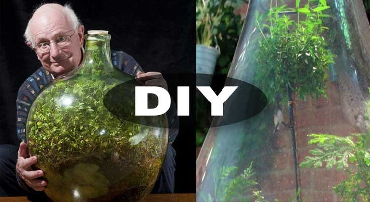 Bottle Garden Sealed For 40 Years Diy This Hasn T Been