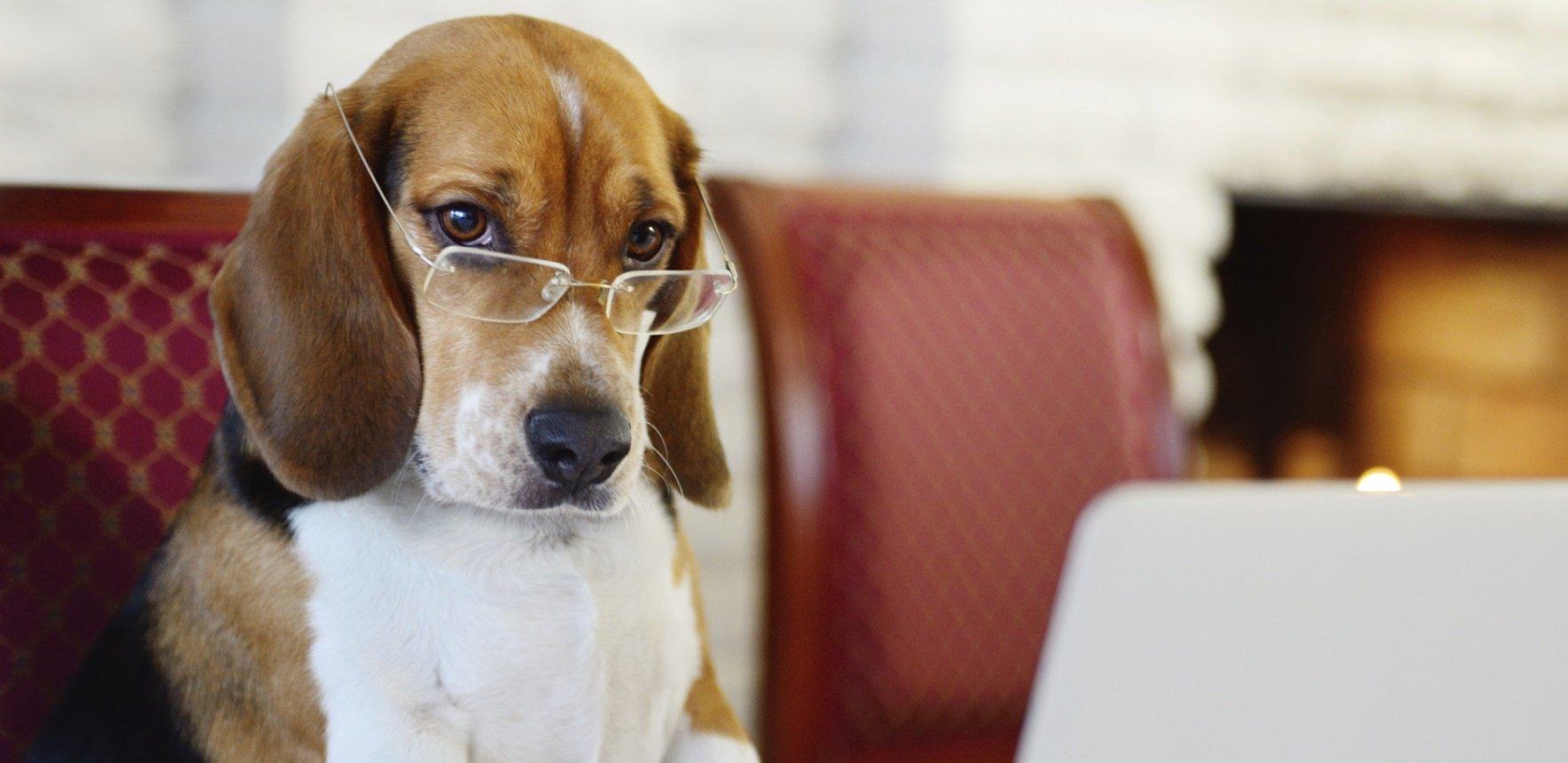 """cao cachorro inteligente.jpg?resize=412,232 - Gente como a gente? Cientista descobre que cachorros """"também são pessoas"""""""