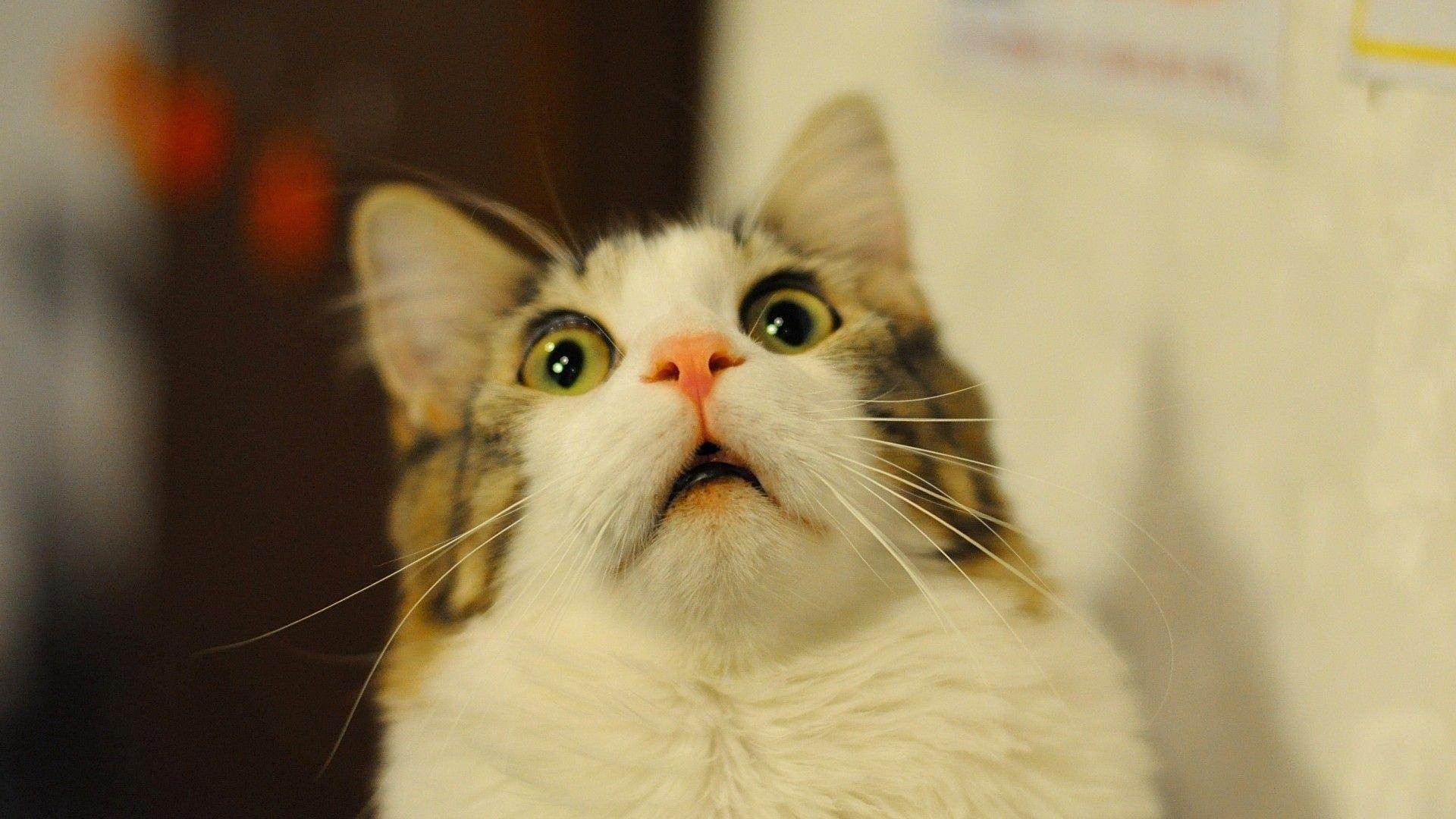 cat 1 jpg compressor.jpg?resize=412,232 - 13 curiosidades que você não fazia ideia sobre os gatos