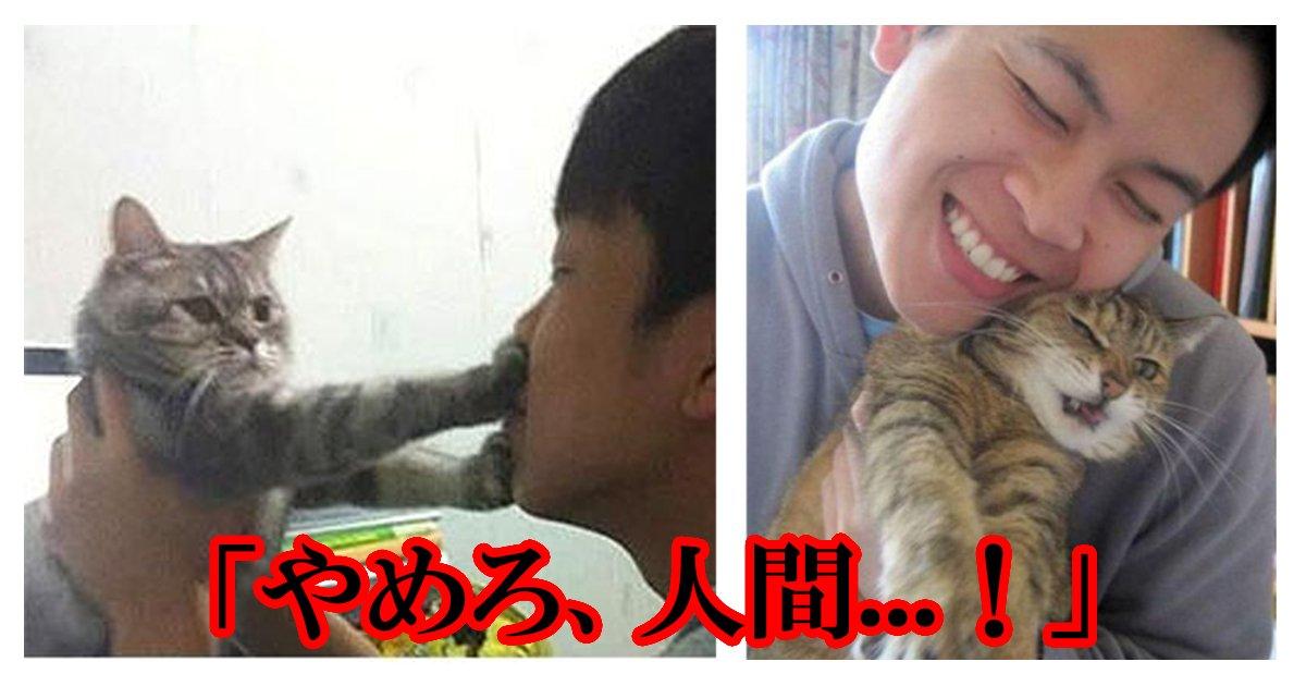 cat_yamero