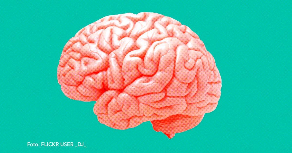 cover 23.jpg?resize=1200,630 - Excelentes alimentos que mantendrán sano tu cerebro.
