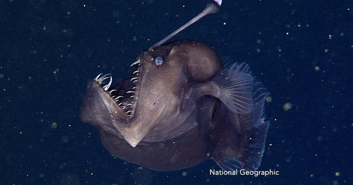 cover 46.jpg?resize=1200,630 - 12 sorprendentes imágenes que te harán tenerle miedo a las aguas del mar