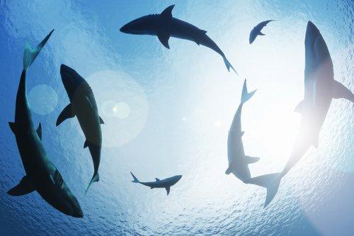 depositphotos 47025415 s 2015.jpg?resize=1200,630 - Gare aux requins en Méditerranée