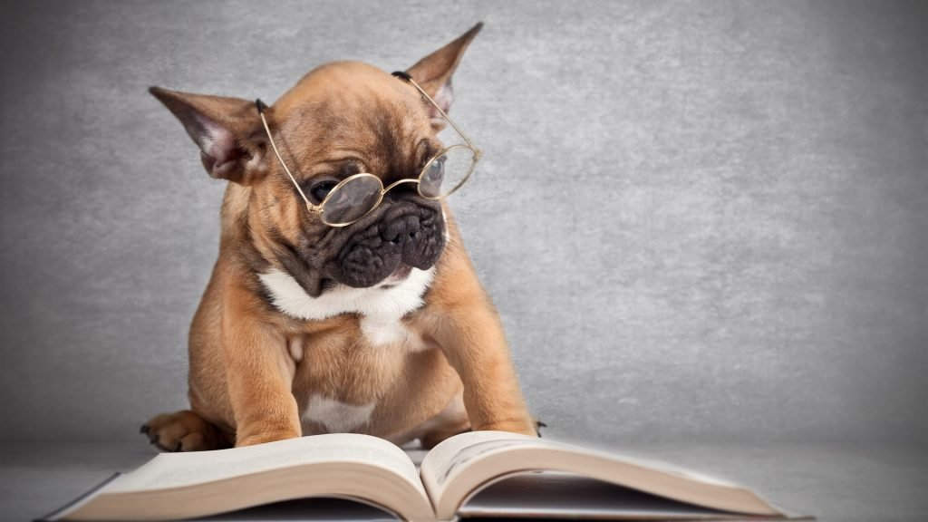 dog-wearing-glasses-reading-a-book_1920x1080