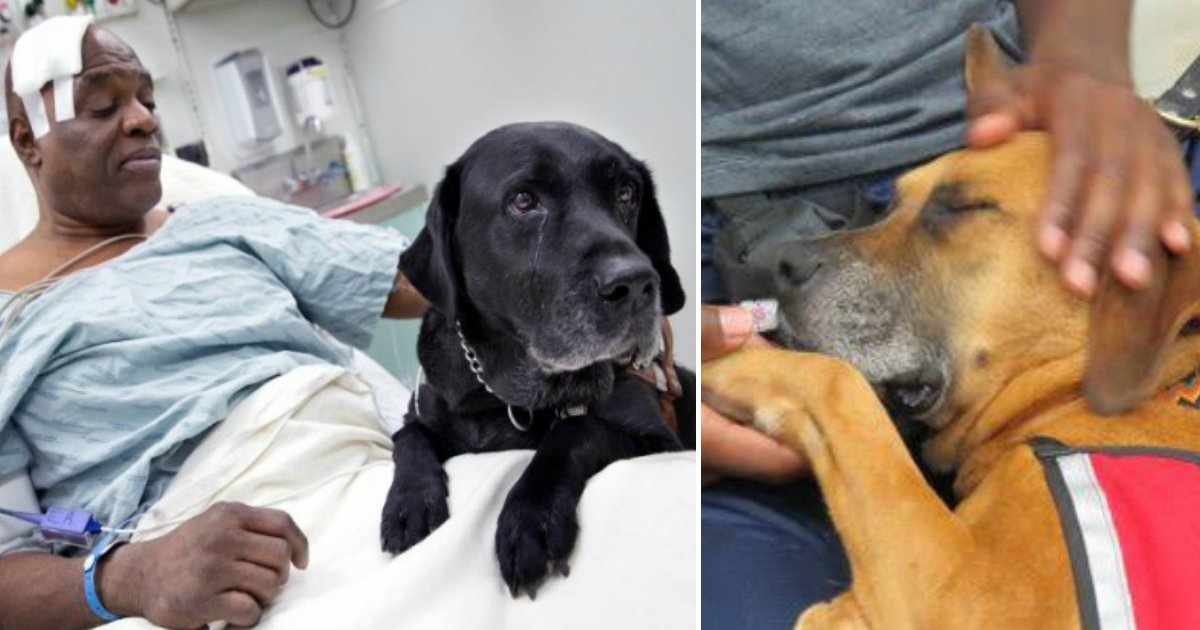 dog - 10 cachorrinhos heróis que vão te emocionar com suas histórias