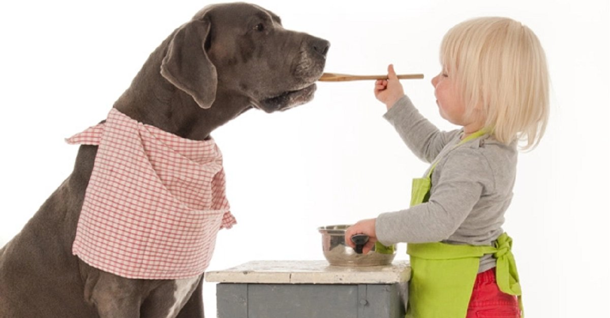 doggie - What Type Of People Food Can You Feed Your Dog, And What Not?
