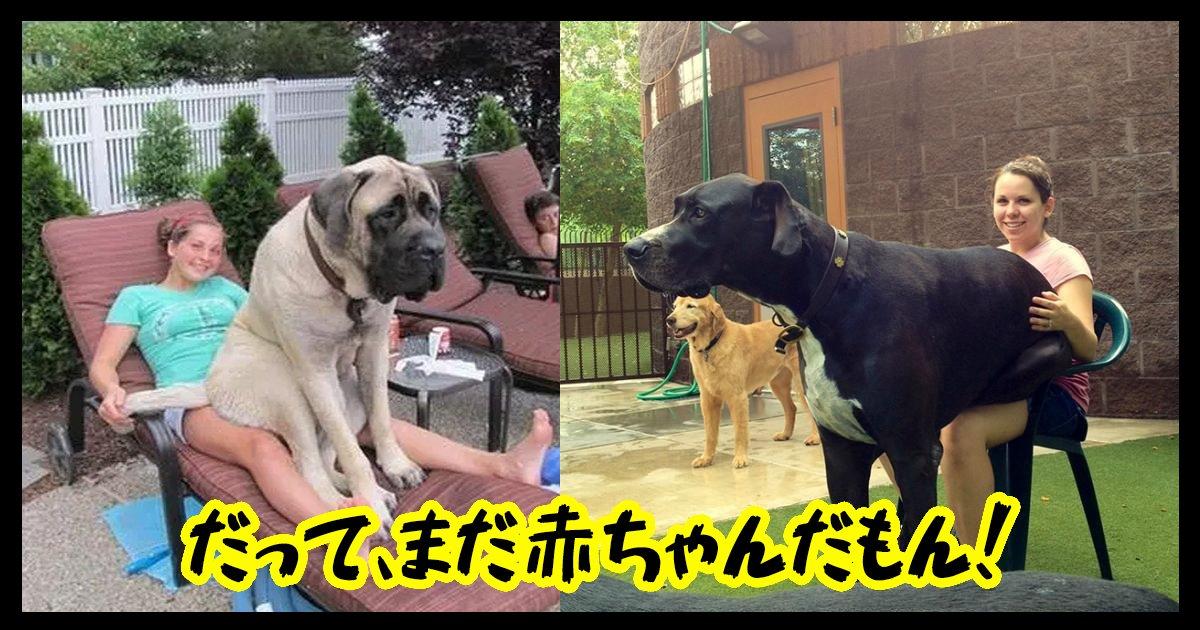 dogsbaby ttl.jpg?resize=1200,630 - 【胸キュン必見】大きな姿に成長しても甘えたいワンちゃん!