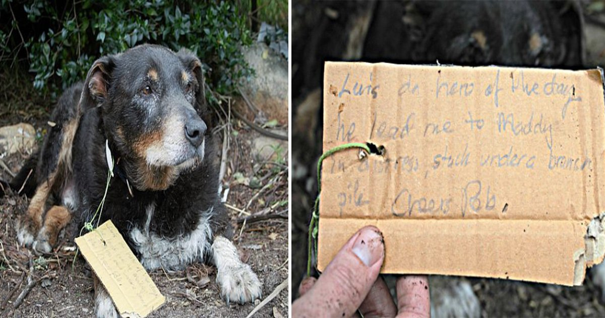 ec8db8eb84ac 15 - Missing Dog Returns Home With A Note Around His Neck Saying He Is A Hero
