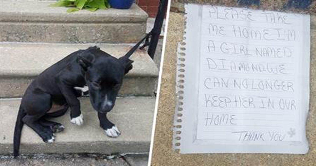 ec8db8eb84ac 25 - Man Finds Abandoned Puppy With Bag Of Pizza And Note Looking For New Home