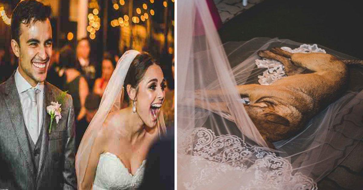 ec8db8eb84ac 33 - During Wedding Vows, A Stray Dog Sleeps On Bride's Veil. The Newlyweds Adopt Him after 10 Days
