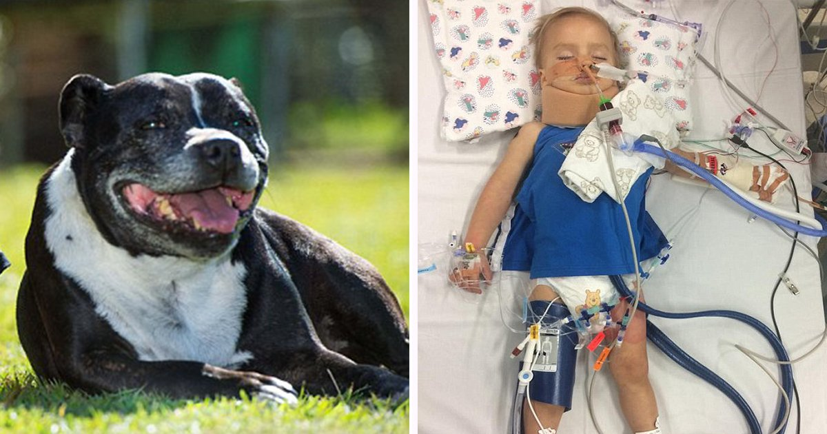 ec8db8eb84ac ebb3b5eab5aceb90a8 ebb3b5eab5aceb90a8 - Little Boy Unconscious in Water. Dog Runs to Get Dad and Saves His Life