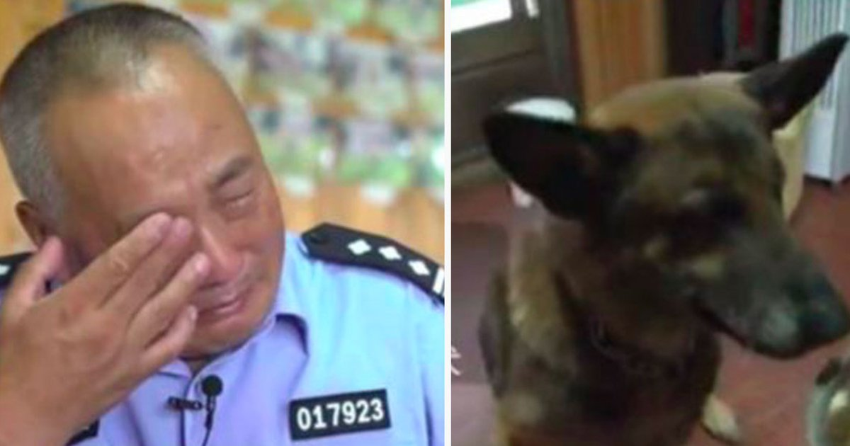 ec8db8eb84ac2 9.jpg?resize=300,169 - Police Officer Cries When He Sees How Former Service Dogs Are Treated, Refuses To Stand By And Do Nothing