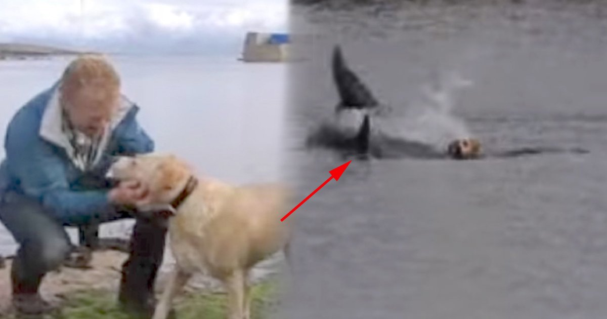 ec8db8eb84ac4 10.jpg?resize=300,169 - Dog Goes Missing Each Day. Owner Sees Him Jumping In Ocean And Discovers His best friend