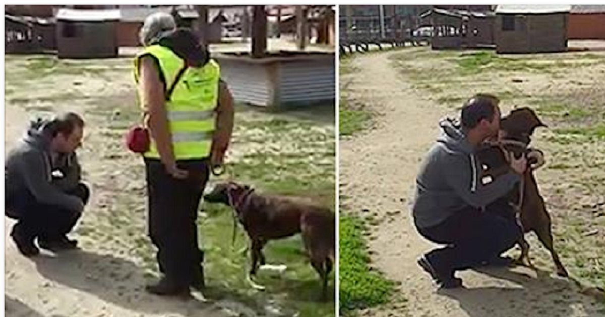 eca09cebaaa9 ec9786ec9d8c 117 - Cachorro reconhece o dono pelo cheiro dois anos depois de ter desaparecido