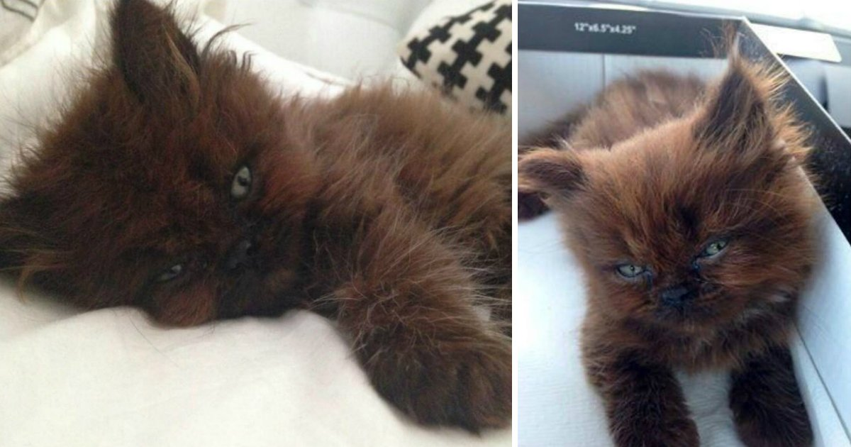 gatofin.jpg?resize=1200,630 - Jovem adota um gatinho doente e tem grande surpresa um ano depois