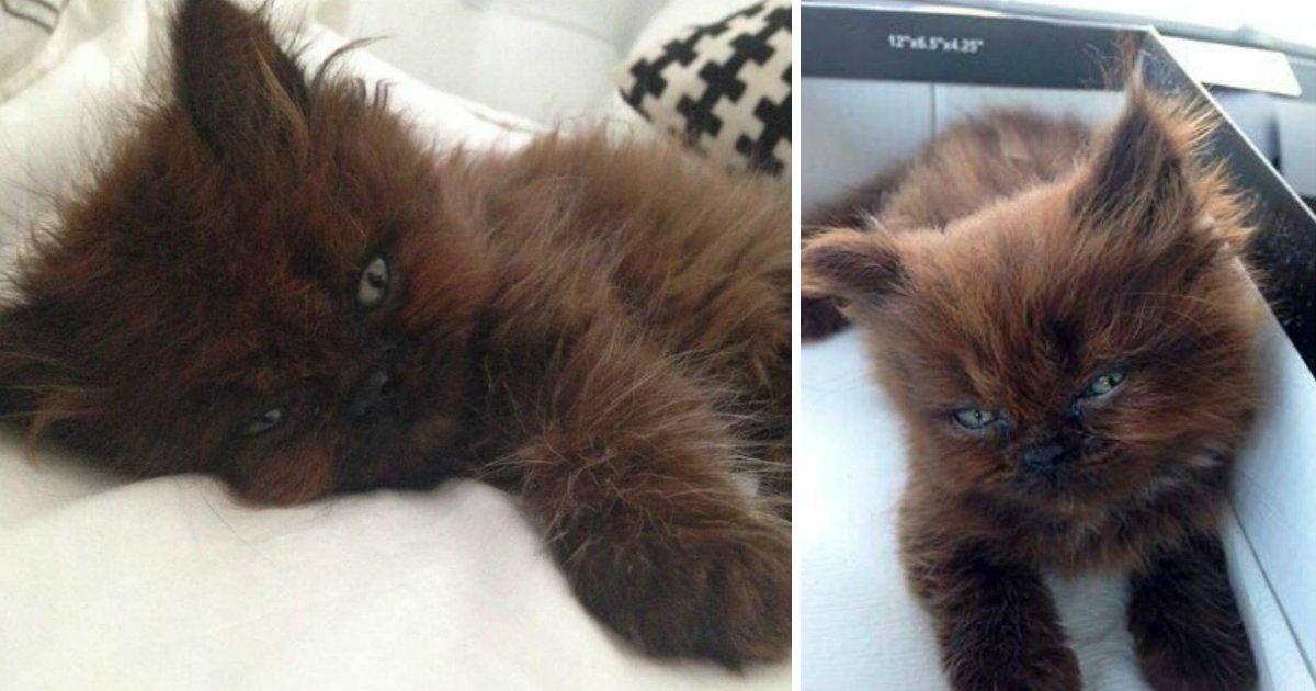 gatofin.jpg?resize=412,232 - Jovem adota um gatinho doente e tem grande surpresa um ano depois