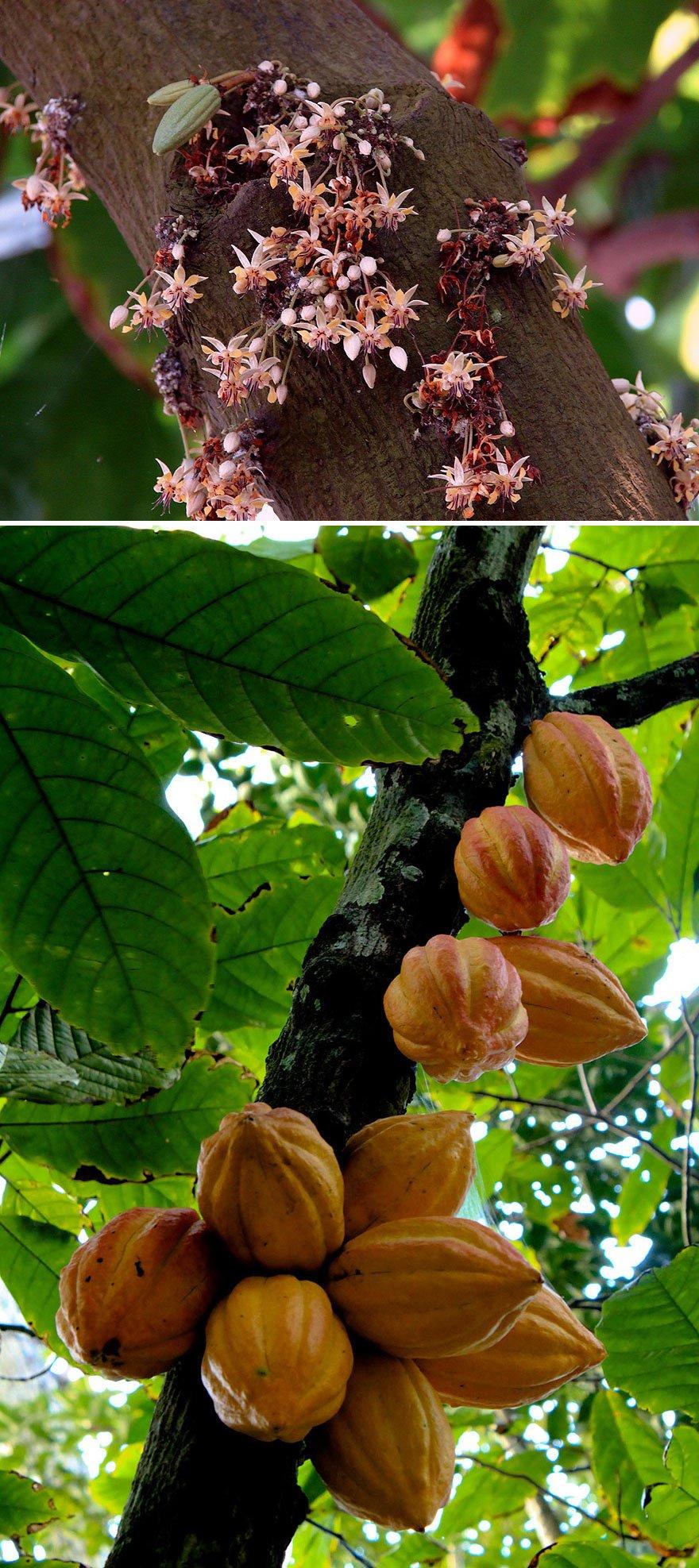how-food-grow-1-58aab11426caf__880